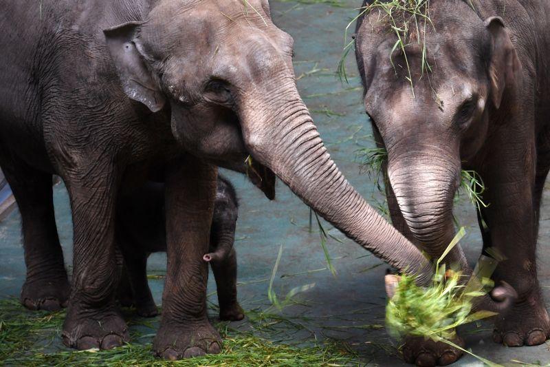 Слоны (Архивное фото)