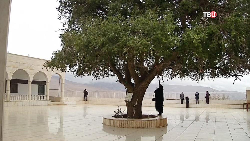 Дуб Авеля в Сирии