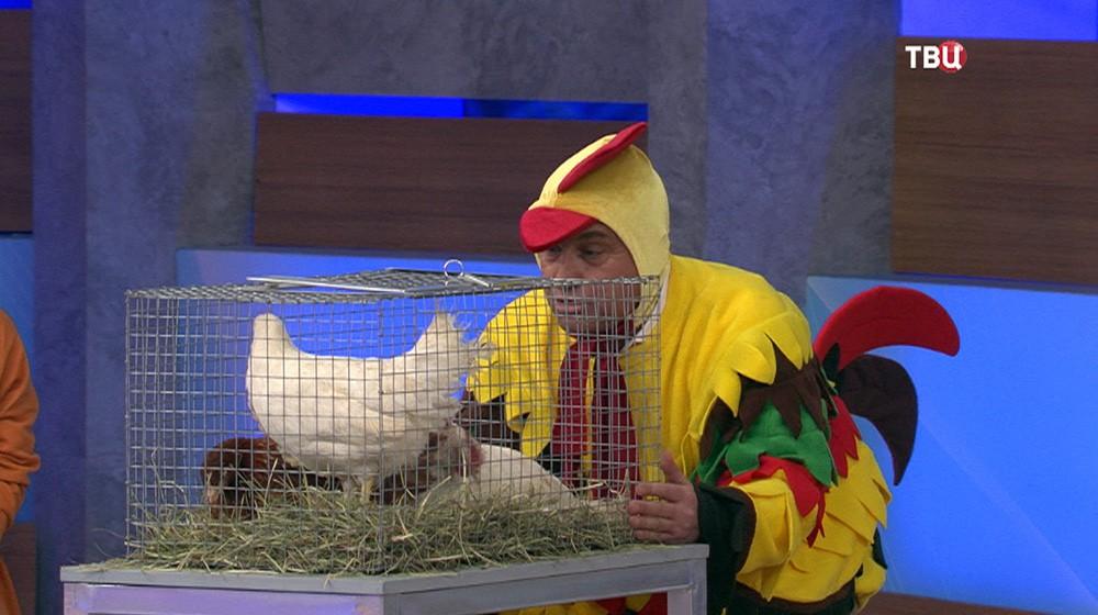 """Кадр из программы """"Естественный отбор. Голень куриная"""""""
