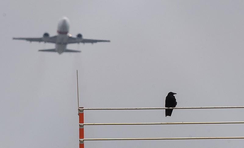 Птица на фоне взлетающего самолета