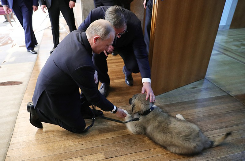 Владимир Путин и щенок шарпланинской овчарки