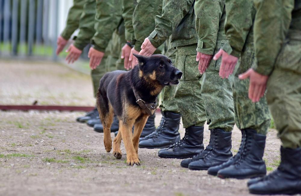 Курсанты со служебной собакой