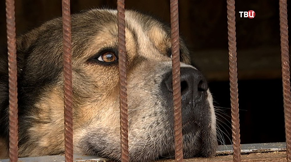 Собака в приюте