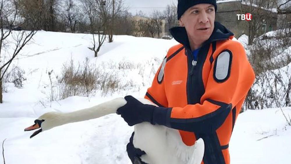Спасатели МЧС и лебедь