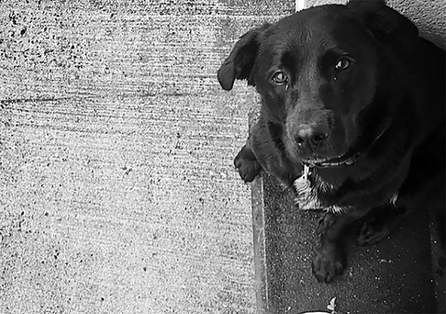 Собака футболиста Эмилиано Салы