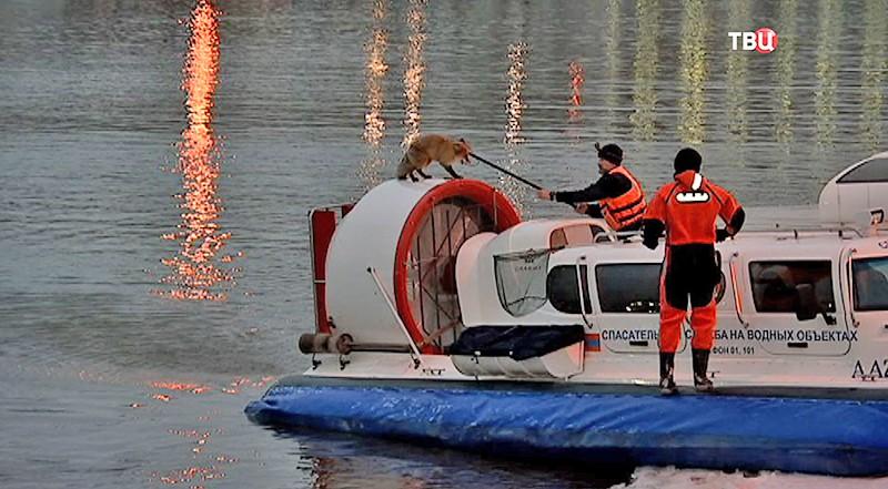 Спасатели ловят лису