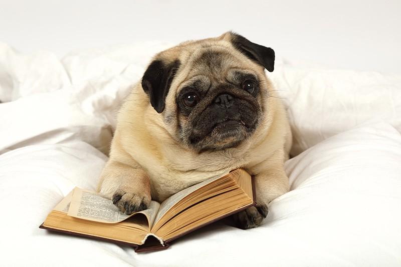 Как собаки приучают детей к чтению