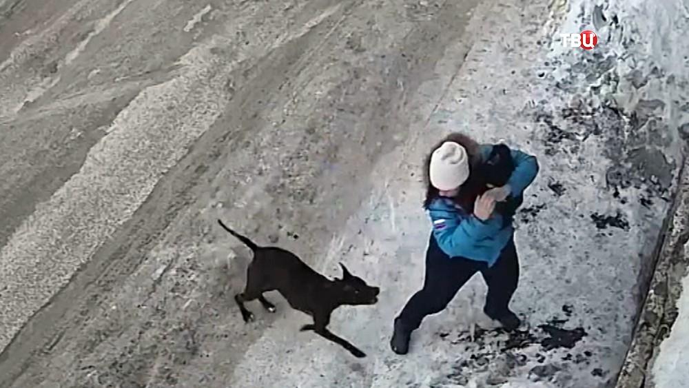 Нападение бойцовской собаки на женщину