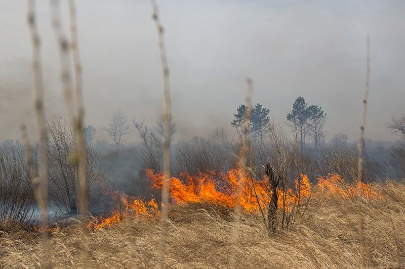 Сухая трава горит в поле