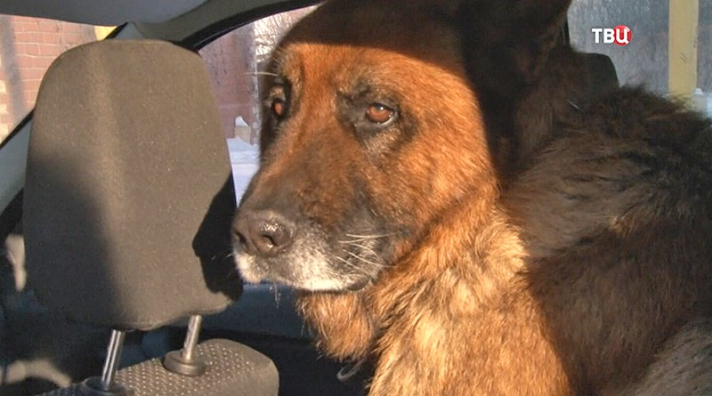 Найденная собака Еран