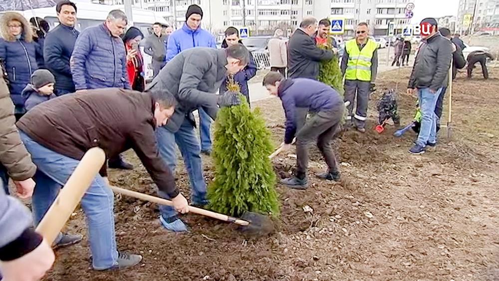 Высадка деревьев в Крыму