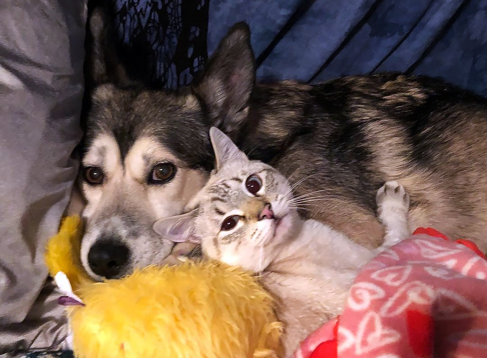 Кошка Харпурр и собака Синдер в приюте на Аляске