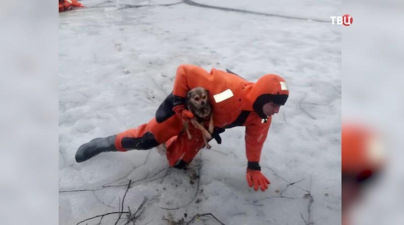 Спасатель вытаскивает собаку из полыньи