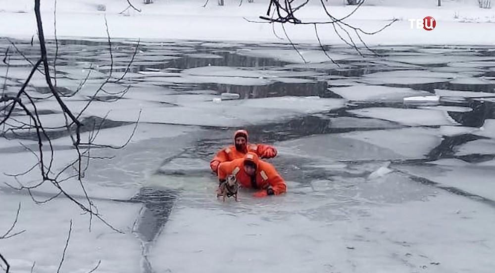 Спасатели вытаскивают собаку из полыньи