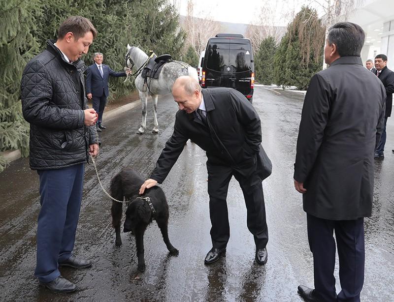 Владимиру Путину в Бишкеке подарили коня и киргизскую борзую