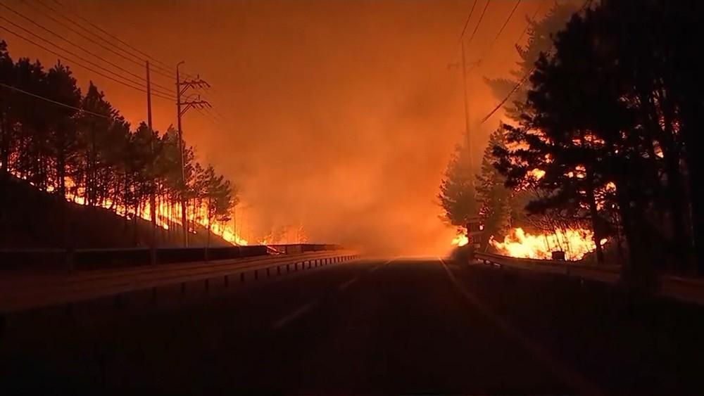 Лесные пожары в Южной Корее