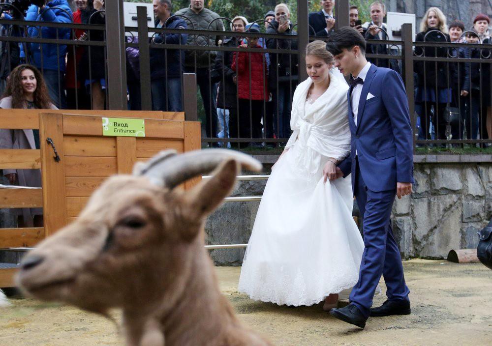 Свадьба в зоопарке