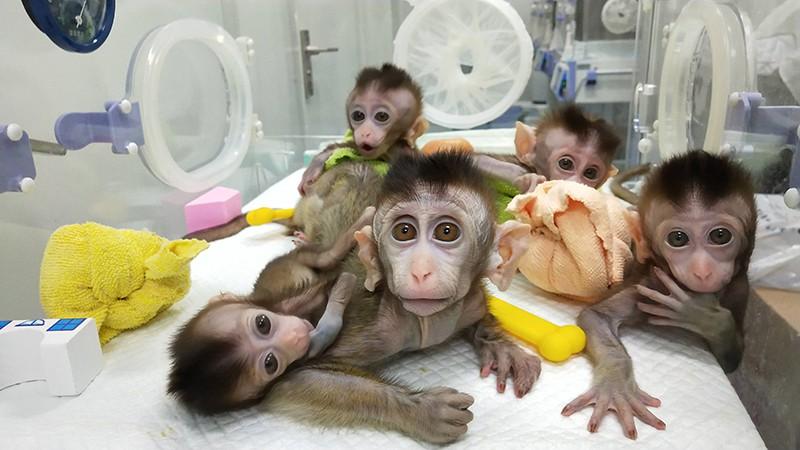Картинки по запросу обезьяны с человеческим мозгом