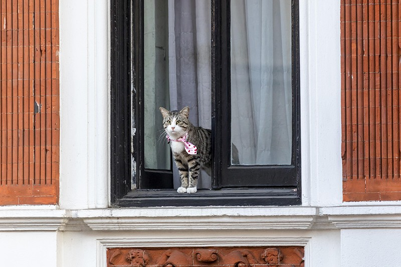 Кот по кличке Викиликс Джулиана Ассанжа
