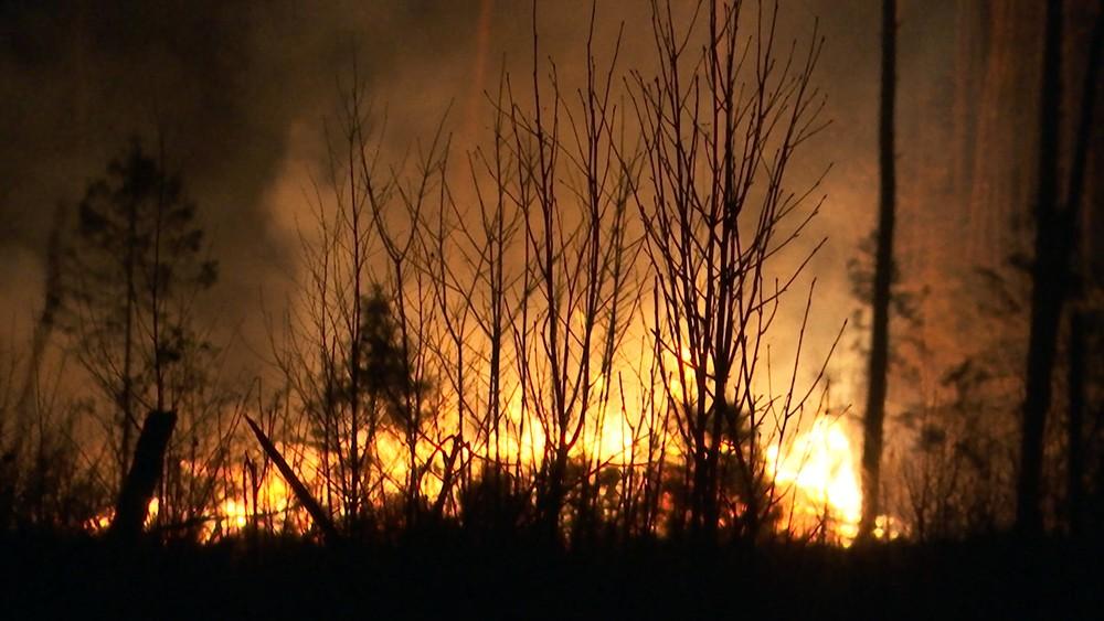 """Пожар в парке """"Лосиный остров"""""""