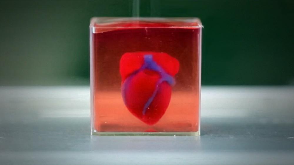На 3D-принтере впервые напечатали живое сердце