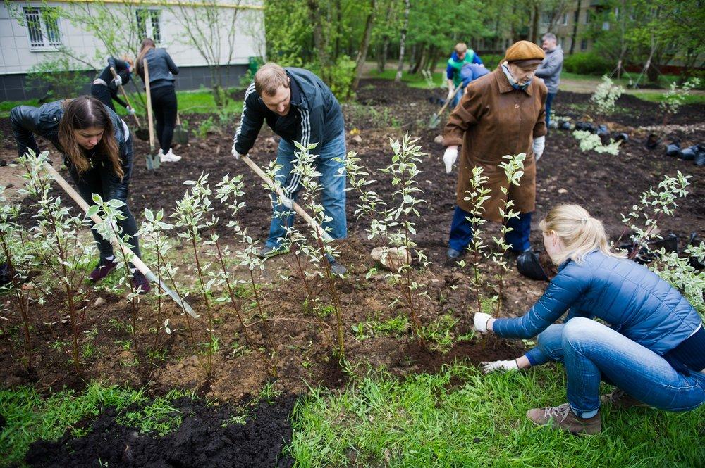 """Высадка деревьев и кустарников в рамках акции """"Миллион деревьев"""""""