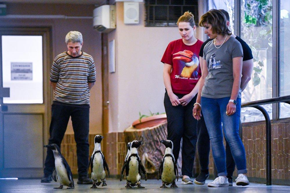 Парад пингвинов в Московском зоопарке