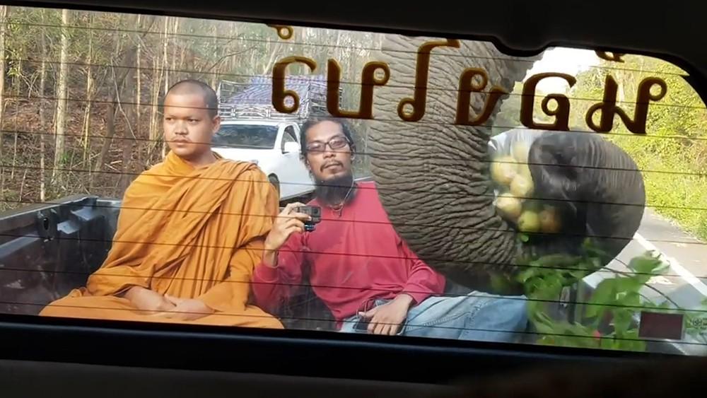 Слон поедает фрукты из машины