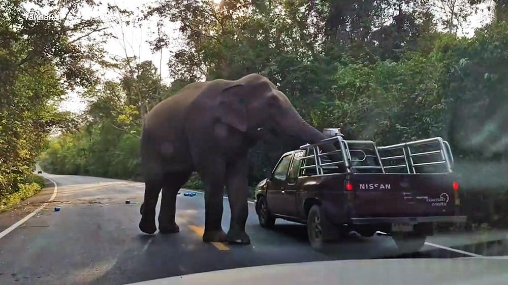 Слон на дороге