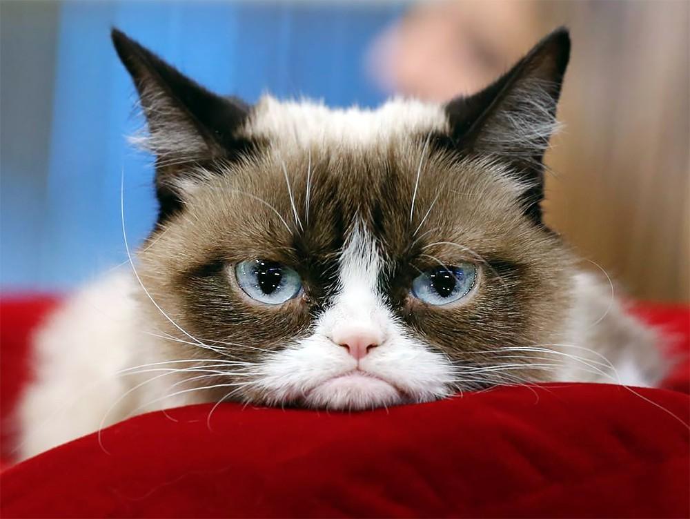 Кошка Grumpy Cat