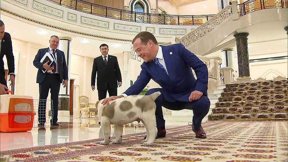 Дмитрий Медведев гладит щенка