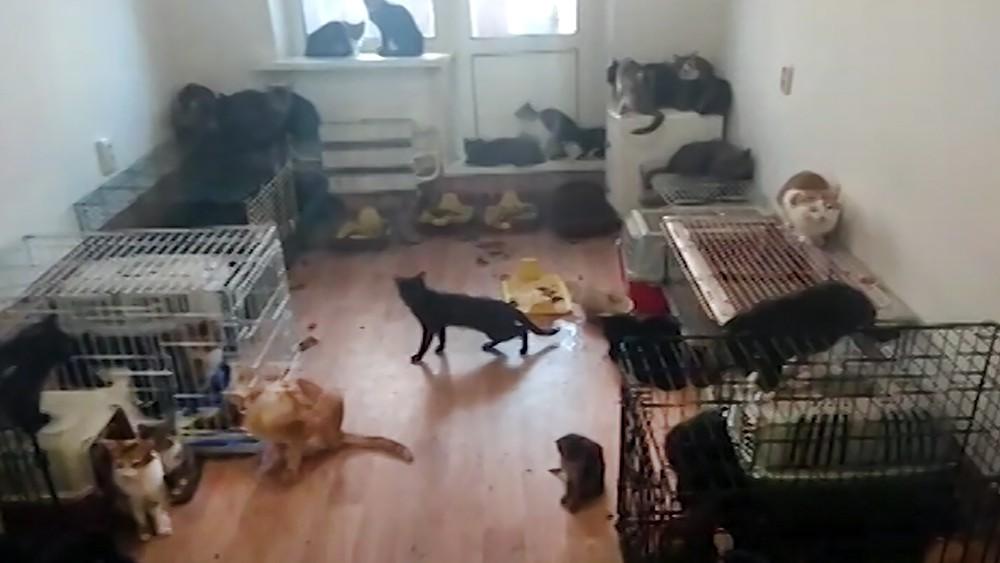 Квартира с кошками