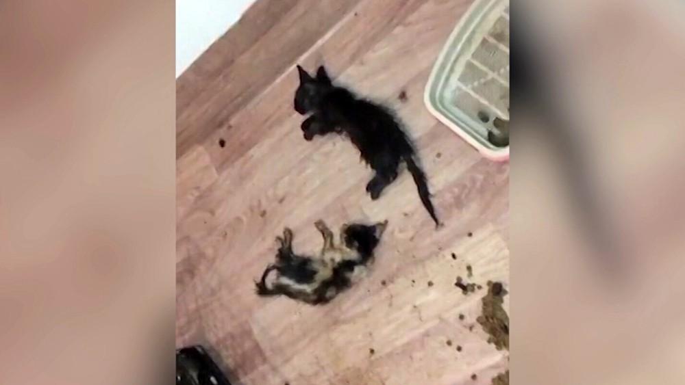 Погибшие котята в квартире