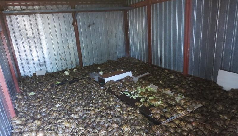 Черепахи в фургоне