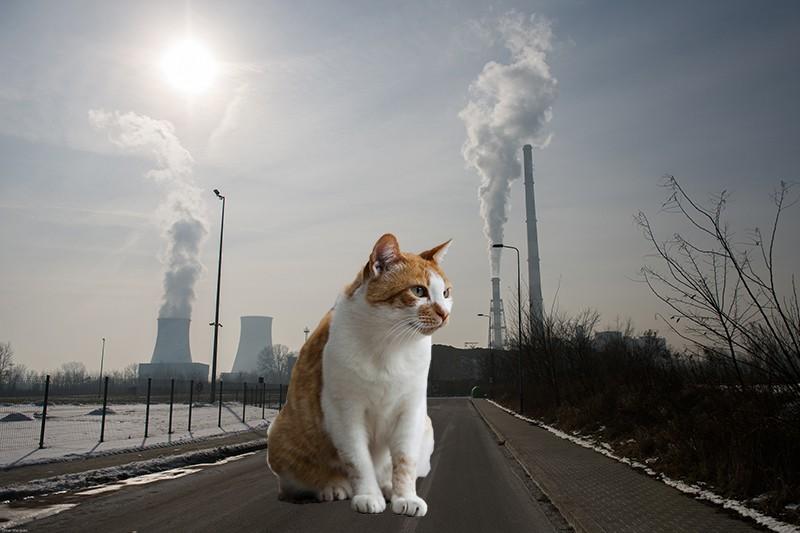 Коллаж: кот