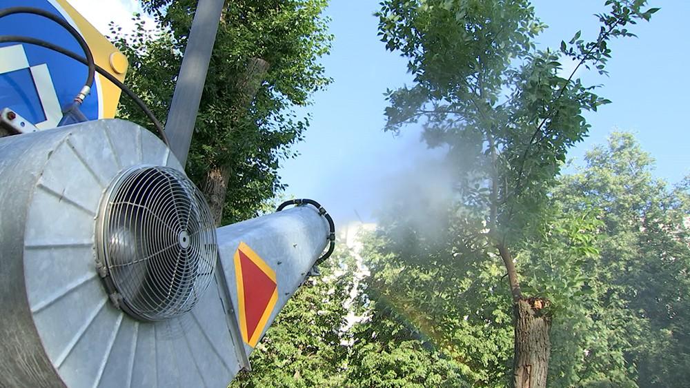 Обработка деревьев от насекомых
