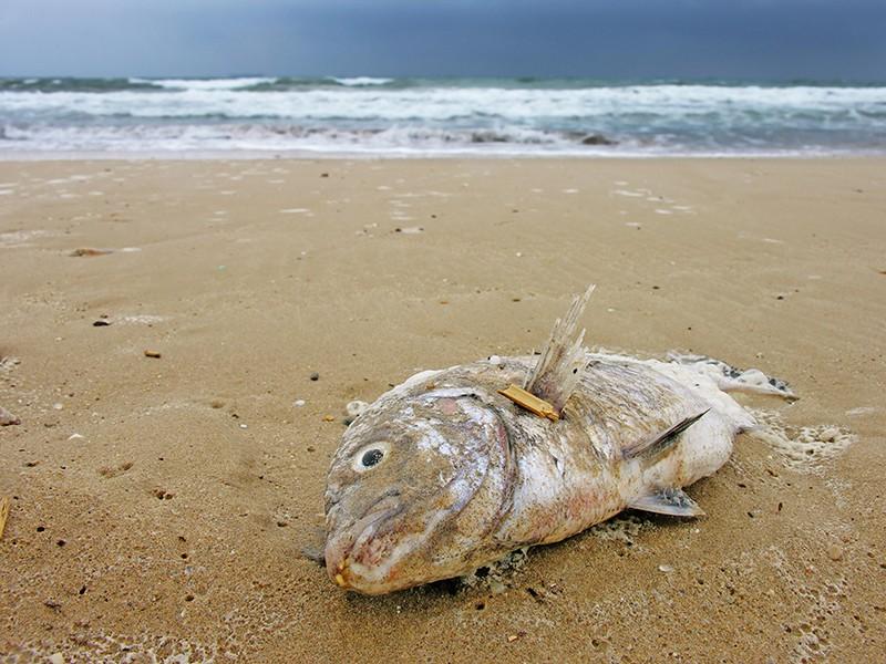 Выброшенная рыба на берегу
