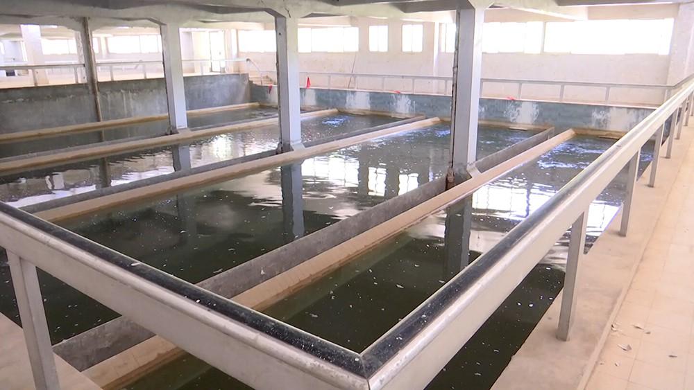 Завод по розливу питьевой воды в Сирии