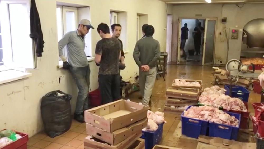 Нелегальный мясной цех в Реутове