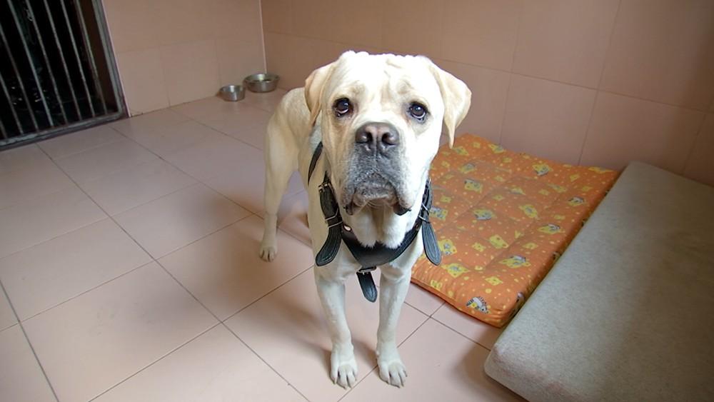 Собака в ветеринарной клиники