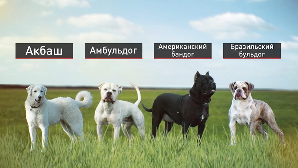 Собаки вошедшие в список потенциально опасных