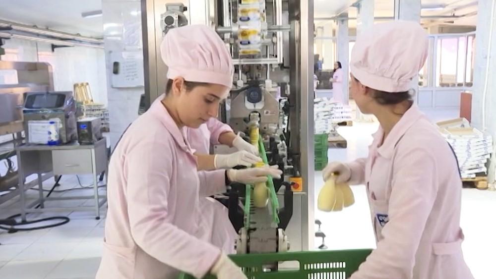 Молочный завод в Сирии