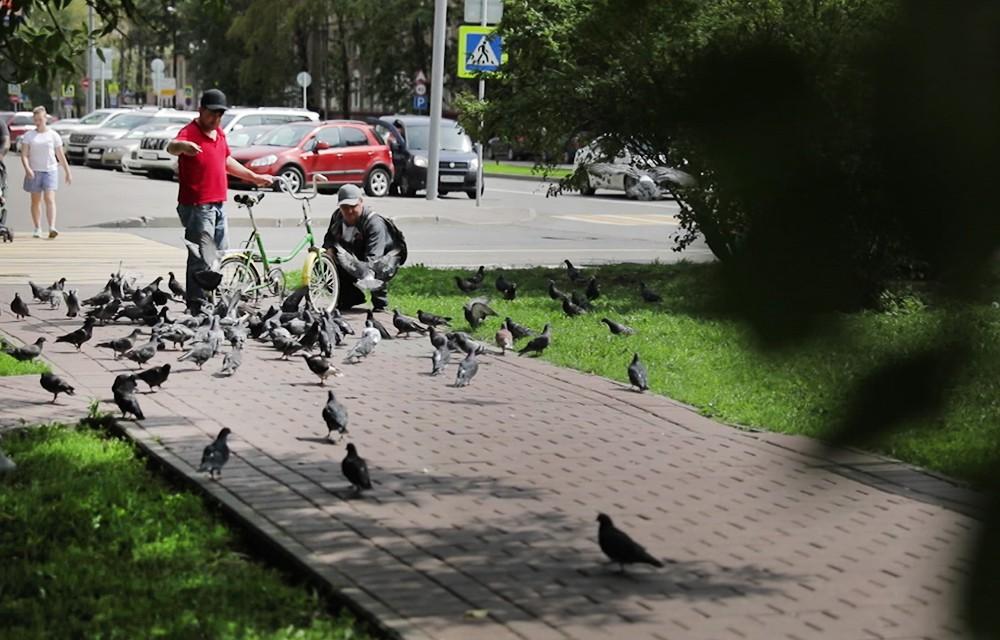 Голуби в парке