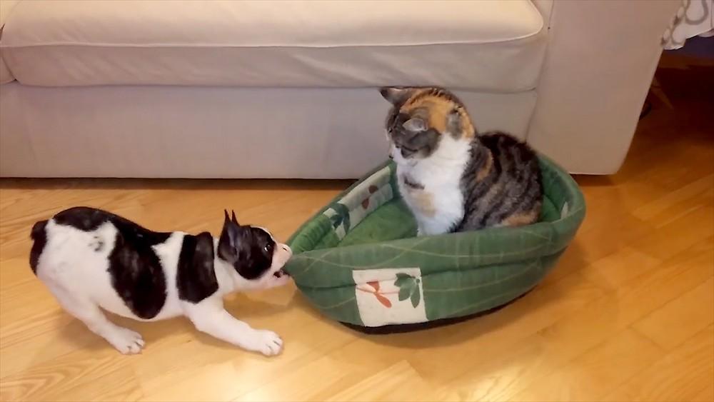 Щенок и кот
