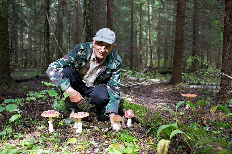 В Подмосковье грибник 8 дней блуждал по лесу :: Новости :: ТВ Центр