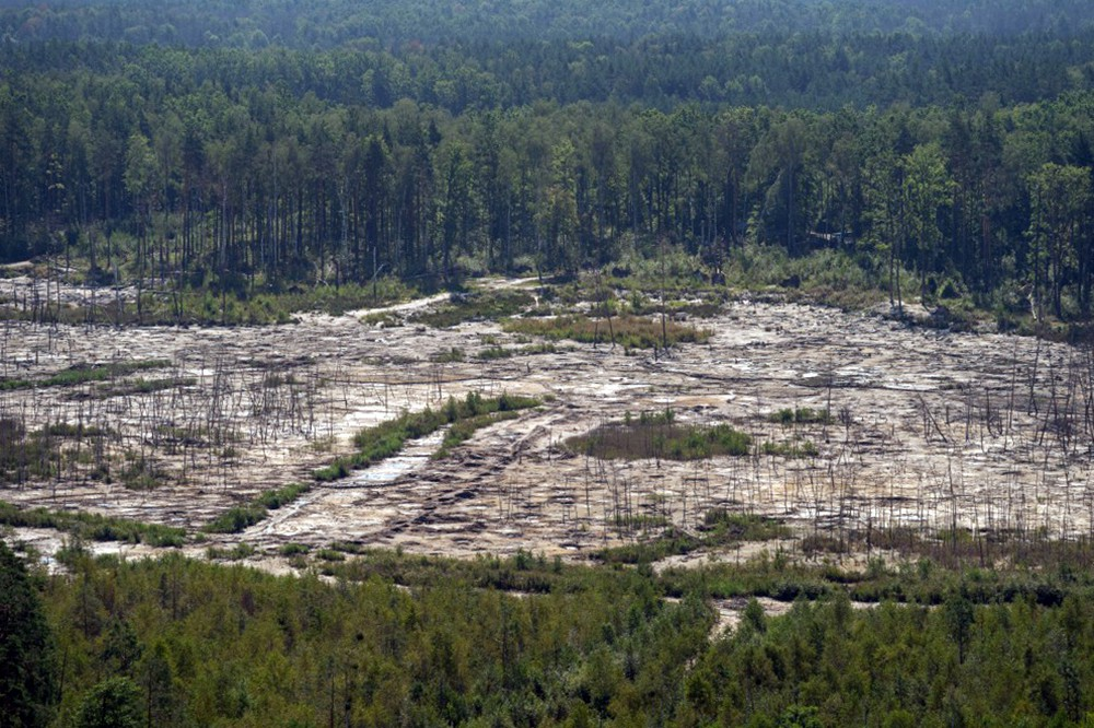 Вырубка лесов на Украине
