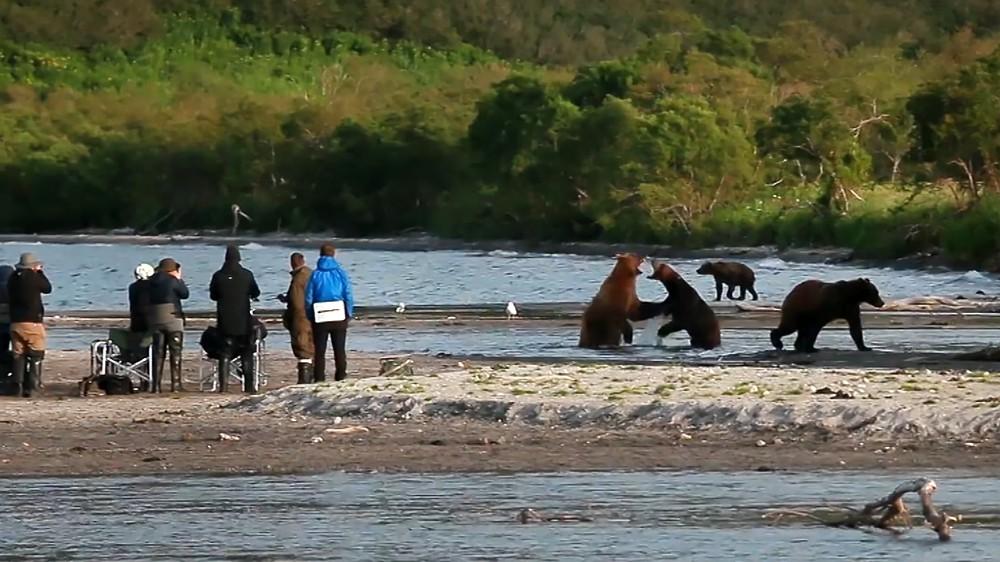 Люди наблюдают за медведями на Камчатке