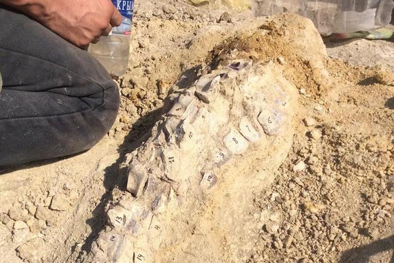 Кости кита-цитатерия