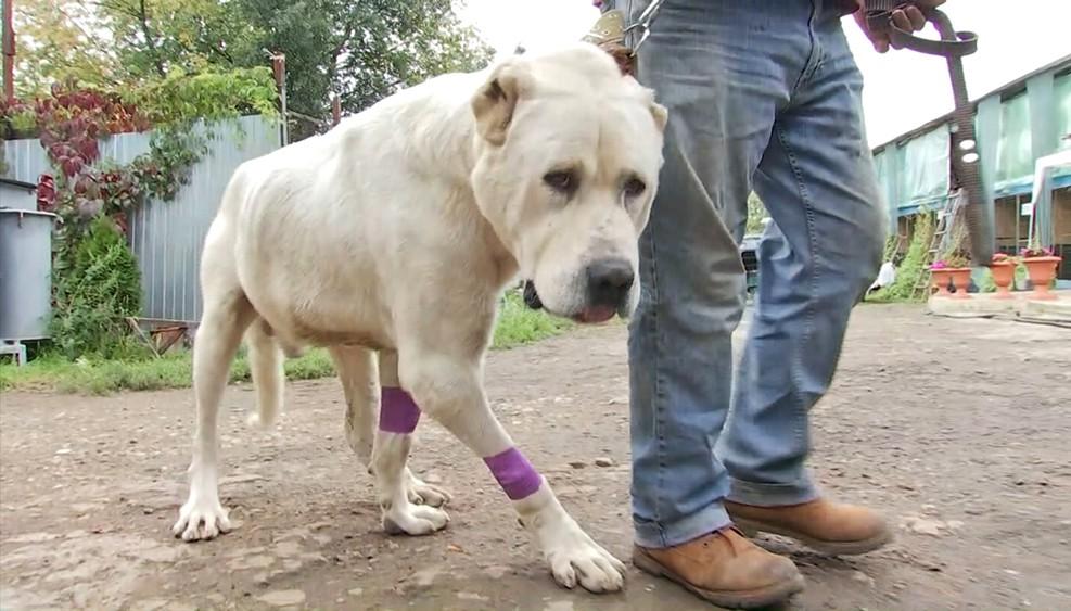 В Москве спасли привязанную к движущейся машине собаку