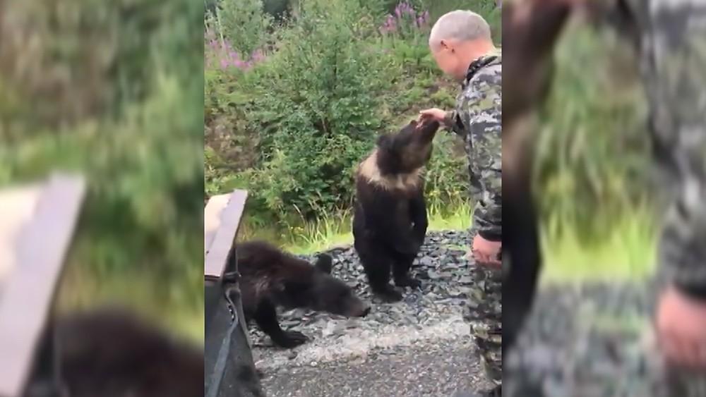 Медведь напал на мужчину